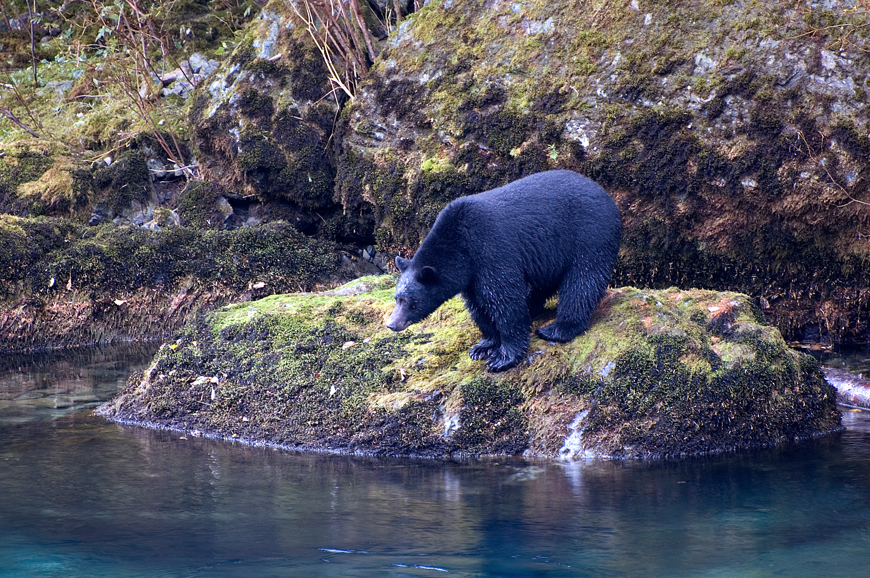 Wildlife viewing village of tahsis british columbia for Fish cleaning station near me